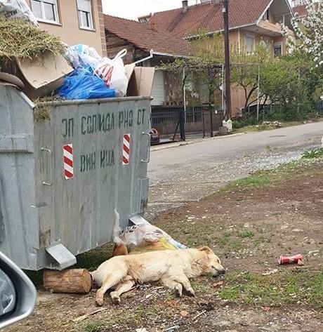 Во Виница отруени десетина  кучиња и мачки за време на полицискиот час