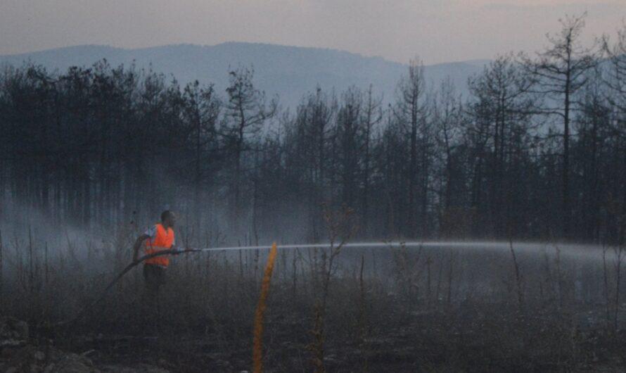 Локализиран пожарот кај Пресечена скала, гори на ридот над Бавчалук