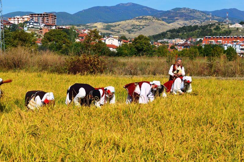 """Започнува манифестацијатa """"Денови на кочанскиот ориз – 2021"""""""