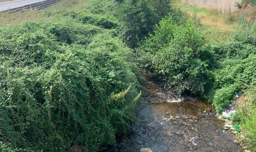 """""""Гласно"""" репортер – Дел од коритото на река Масалница во Оризари обраснато со висока вегетација"""