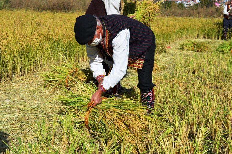 Во тек е јавен повик за избор на најуспешен земјоделец – оризопроизводител во Кочани